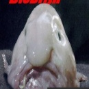 Blobfish: The Game Box Art Cover