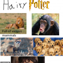 Hairy Potter Box Art Cover